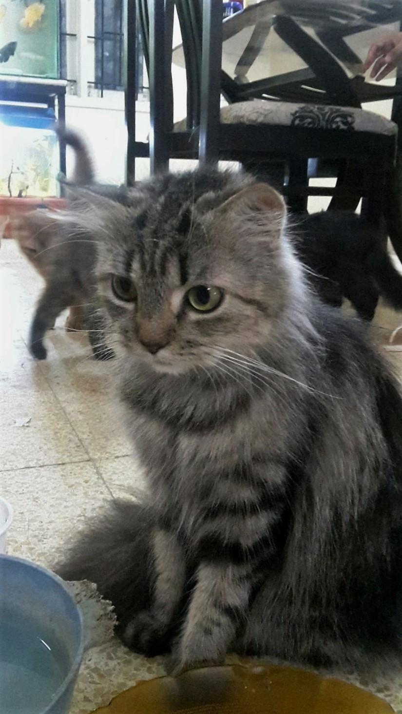 DN Cat