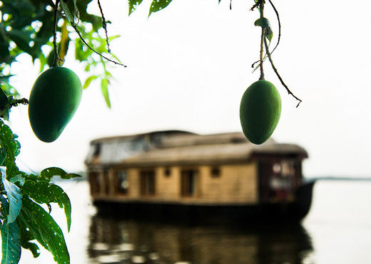 Mango Memories of a Malayali